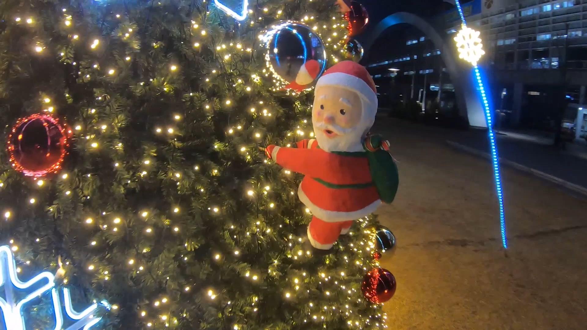 시청앞 잔디광장 크리스마스트리 목록 이미지